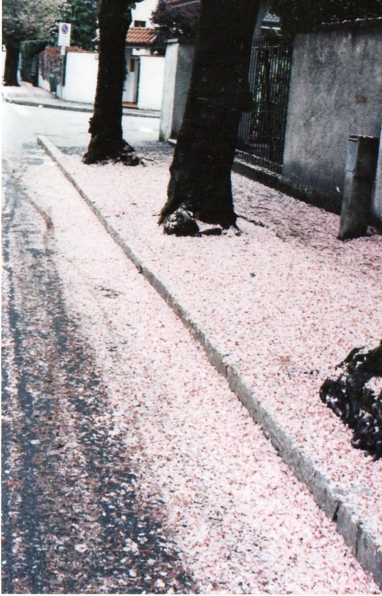 Via Matteotti in primavera